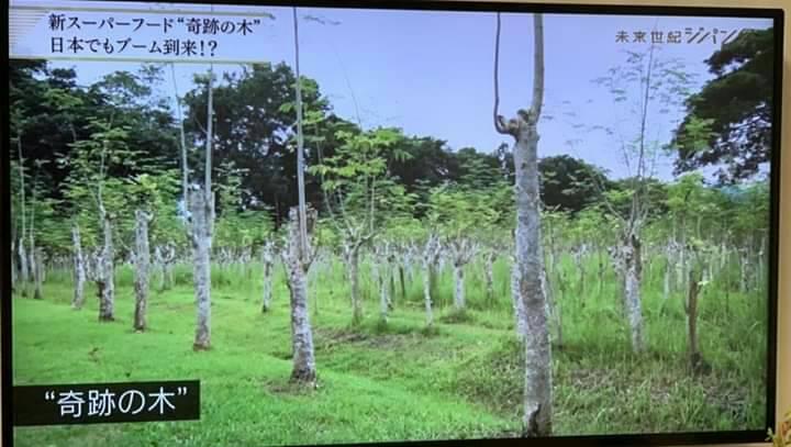当院のモリンガ座浴剤を製造するフィリピン農場がテレビで特集されました!